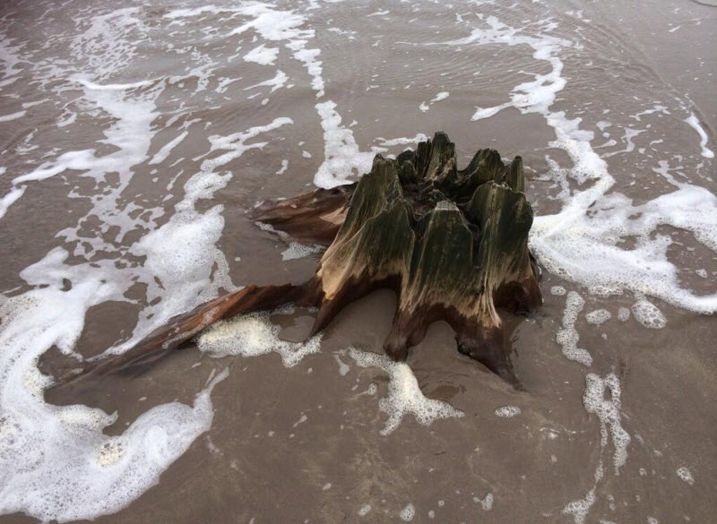 4000 year old petrified forest revealed by storm in Kerry